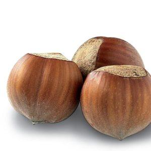 04 409 Hazelnut Gelato