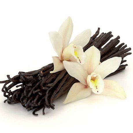 04 508 Vanilla Gelatob